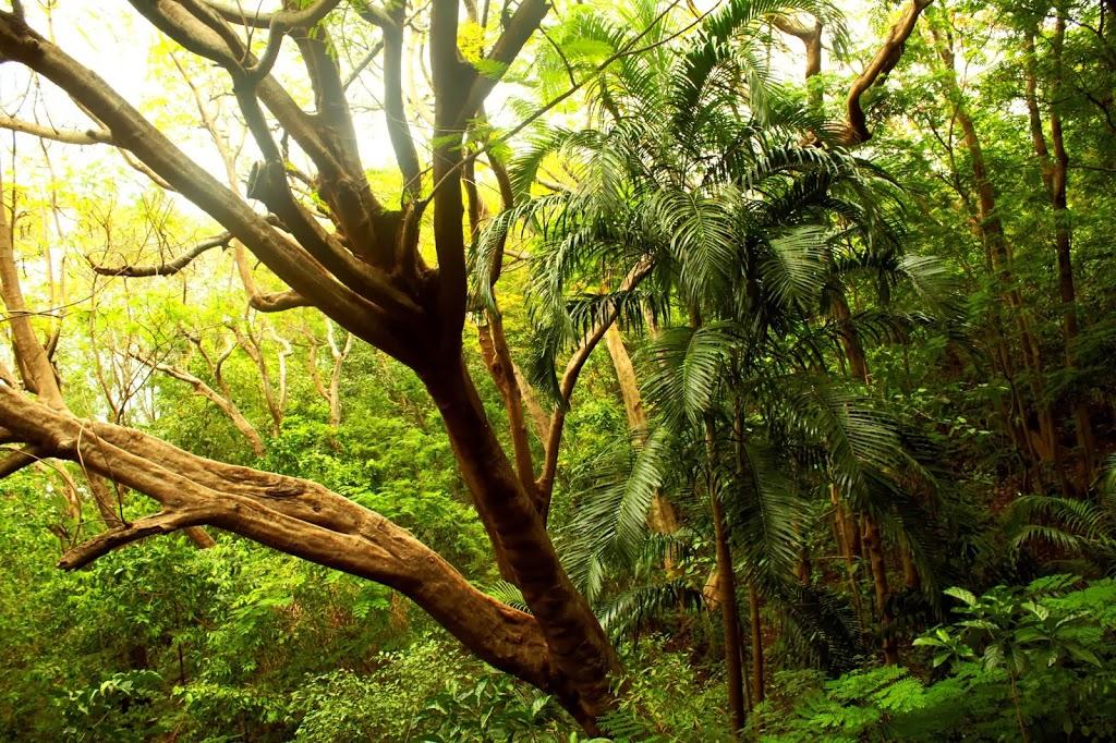 darwin aborigines